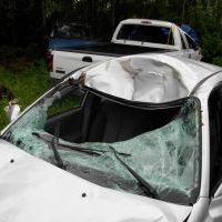 Moose car windshield