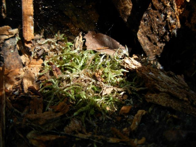 Moss in stump